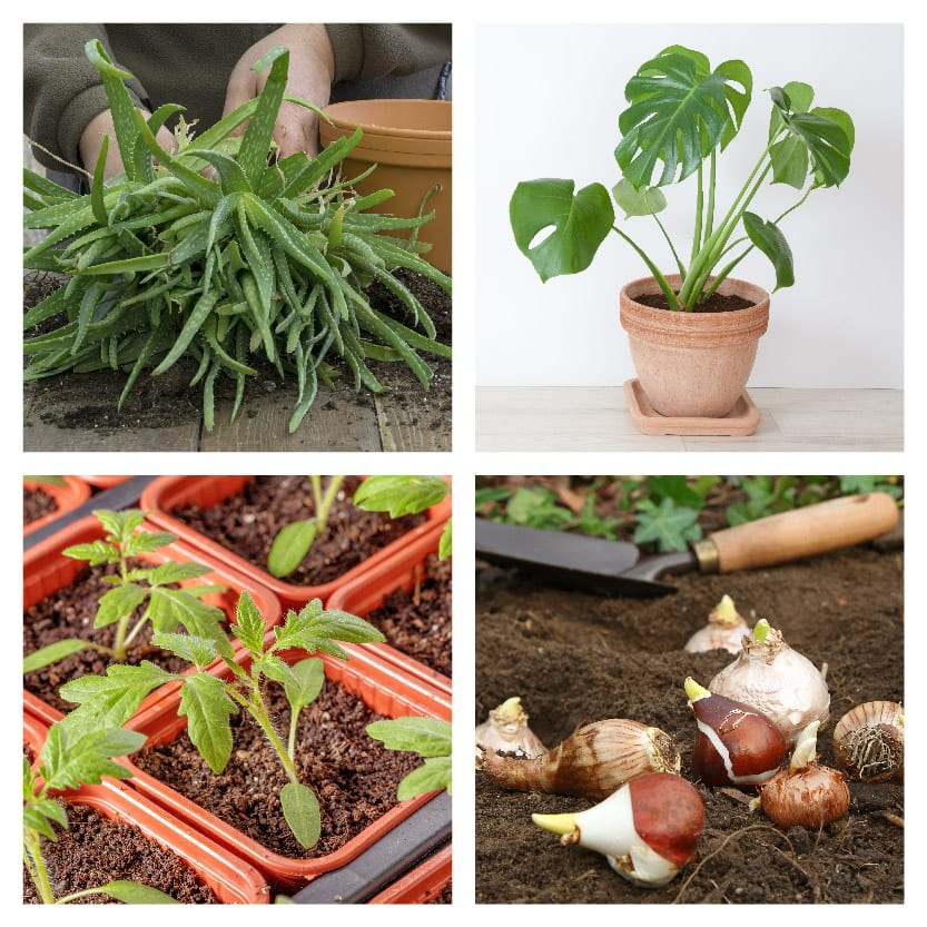 A collage of plants which can be swapped and traded on our website.
